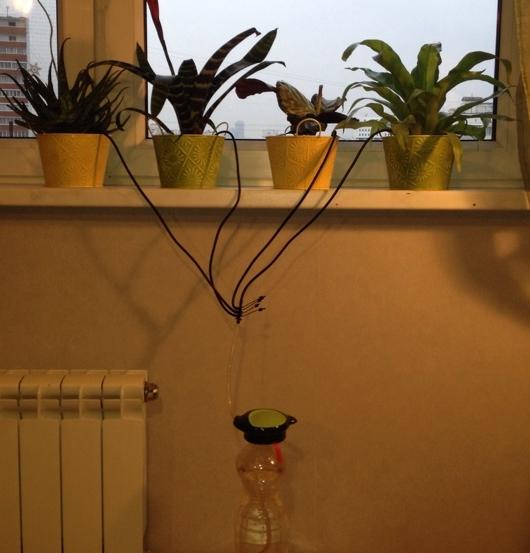 Как сделать автополив комнатных растений своими руками 85